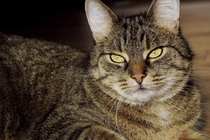 Portrait Of A Cat, Close Up. Pets, Animals Day, Animals Concept. Tabby Cat. Cropped Shot Of A Cat Looking To The Side. Portrait Of A Cat, Close Up. Pets stock photography