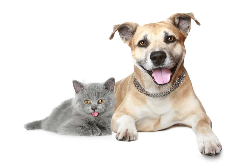 Download Portrait of a cat and dog stock photo. Image of expression - 15665970