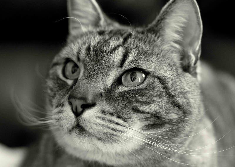 Portrait Of Cat Free Public Domain Cc0 Image