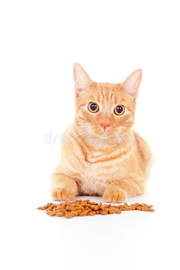 Download Portrait Of A Cat With Feed Stock Image - Image: 27182019