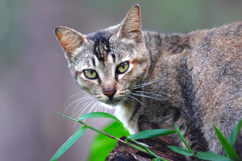 Portrait of cat in garden royalty free stock photos