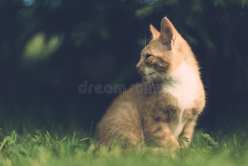 Portrait of cat in grass royalty free stock photography