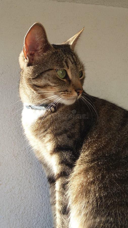 Portrait of a cat. Head, eye, ears, hair royalty free stock photography