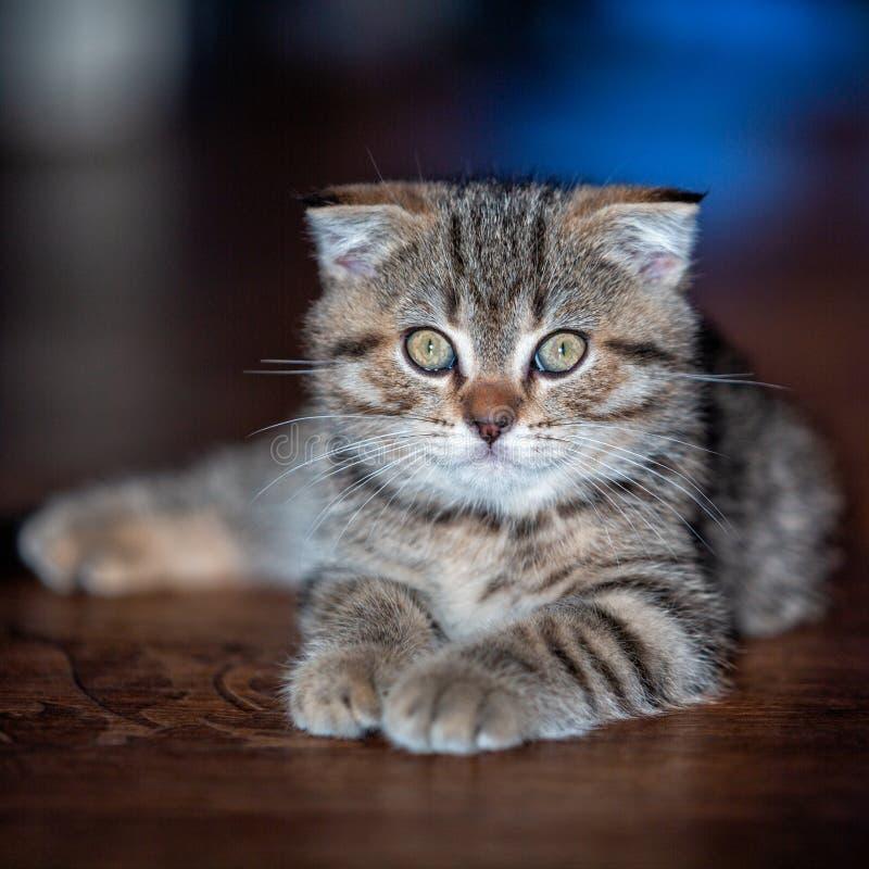 Portrait of a cat. Kitten. Pet royalty free stock photos