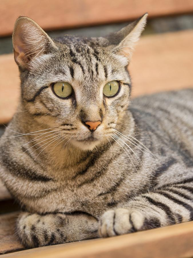 Feline look of a cat stock photography