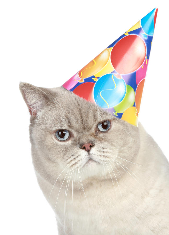 Portrait of a cat with party hat. On a white background stock photography