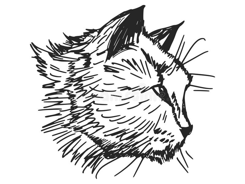 Download Portrait of cat stock vector. Image of background, mammal - 43264528