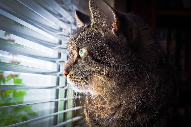 Portrait of cat by window stock photography