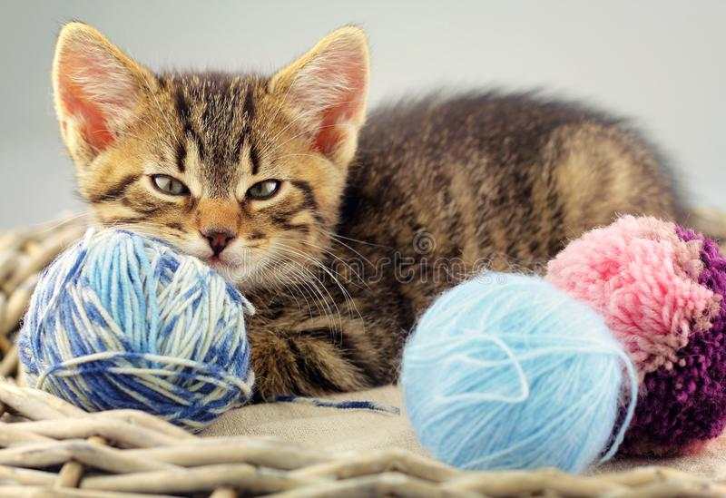 Kitten with a yarn balls of wool. Portrait of a charming kitten with a balls of yarn close up royalty free stock photo