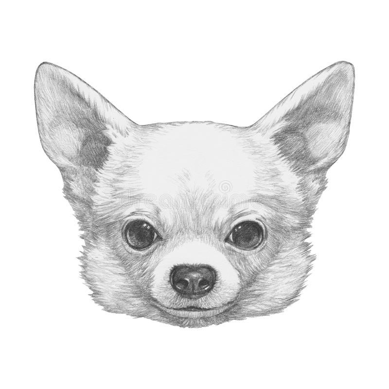 Portrait of Chihuahua. Hand drawn illustration vector illustration