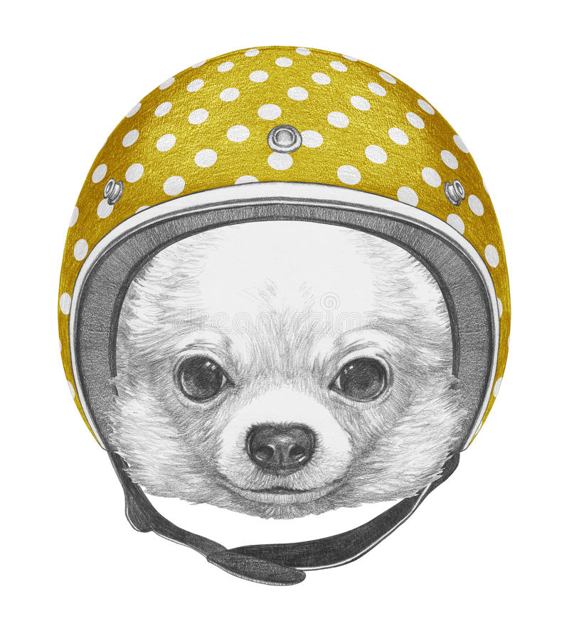 Portrait of Chihuahua with Helmet. Hand drawn illustration stock illustration