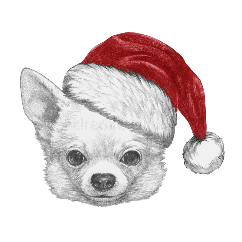 Portrait of Chihuahua with Santa Hat. Hand drawn illustration vector illustration