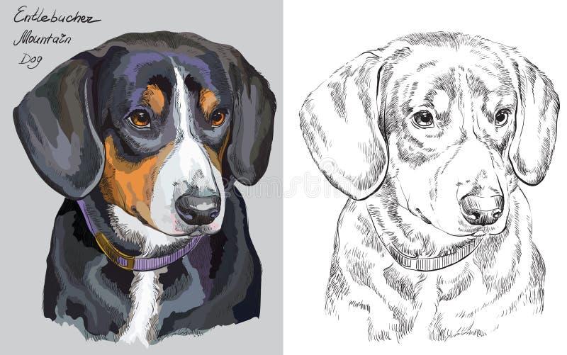 Portrait coloré et monochrome de chien de vecteur de dessin de main illustration stock