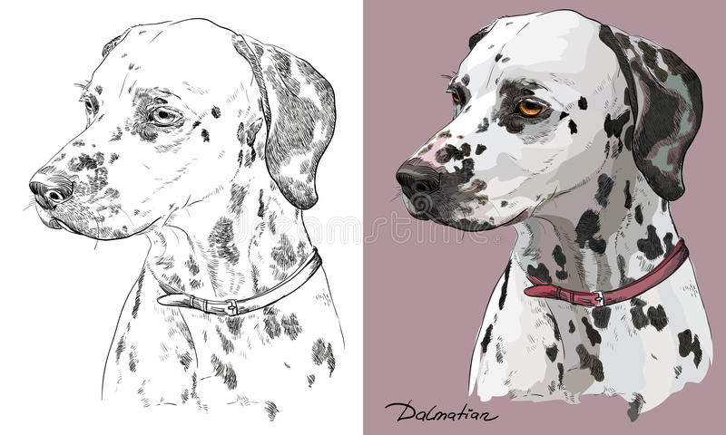 Portrait coloré et monochrome de vecteur de dessin de main de la Dalmatie illustration de vecteur
