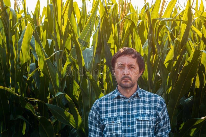 Portrait of confident farmer in tall green cornfield stock photos