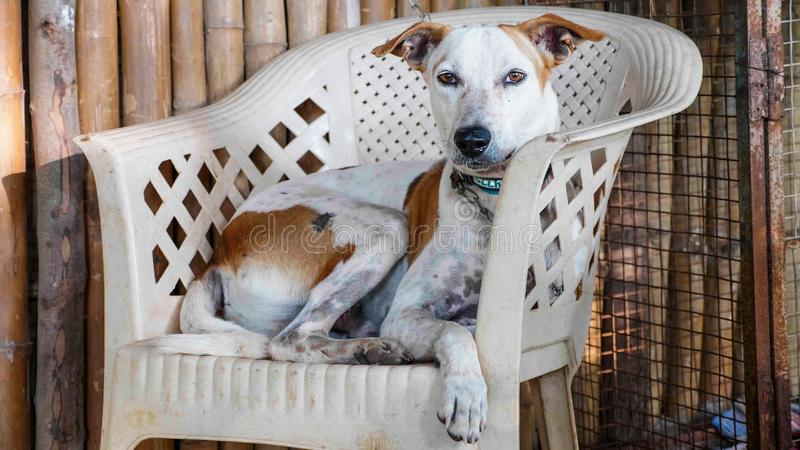 Portrait of cur adult dog lying on the chair at the porch royalty free stock images