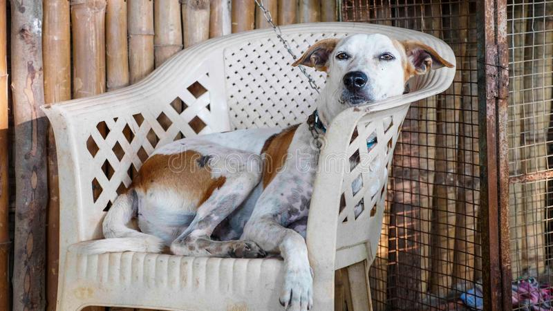 Portrait of cur adult dog lying on the chair at the porch stock photos