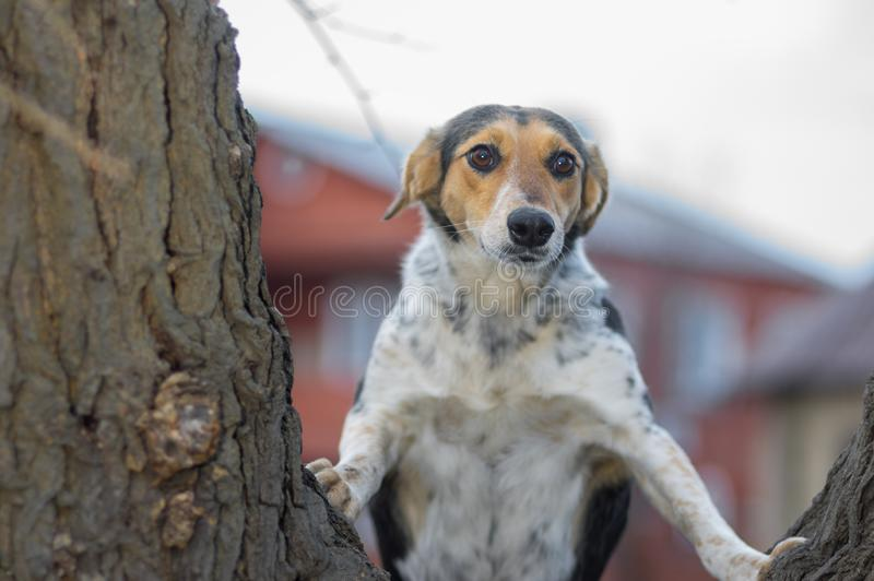 Dog that looking about in wide-eyed astonishment standing on tree branch stock image