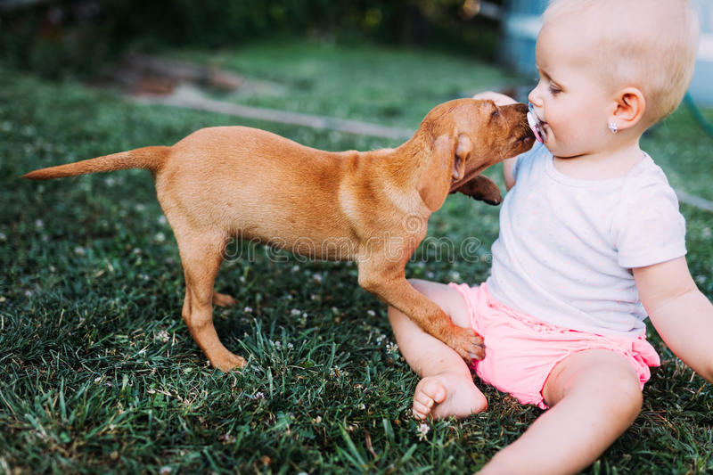 Portrait of cute baby playing with dog. On grassland royalty free stock photos
