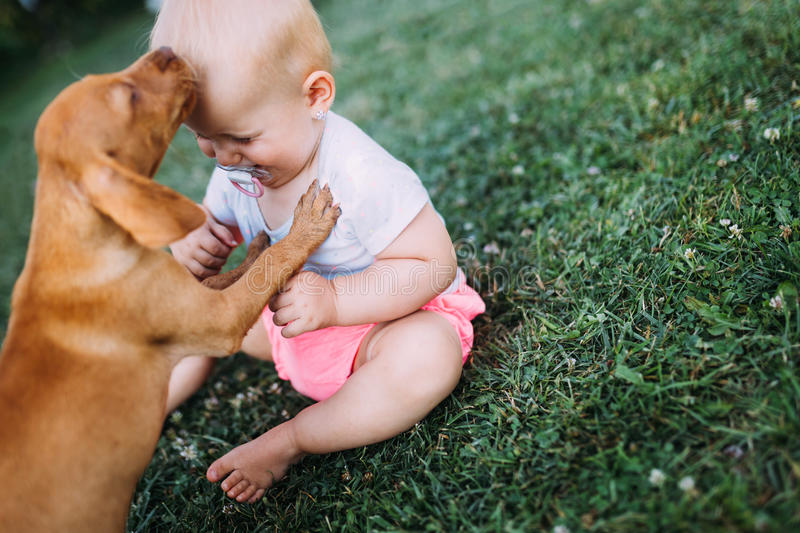 Portrait of cute baby playing with dog. On lawn stock photo