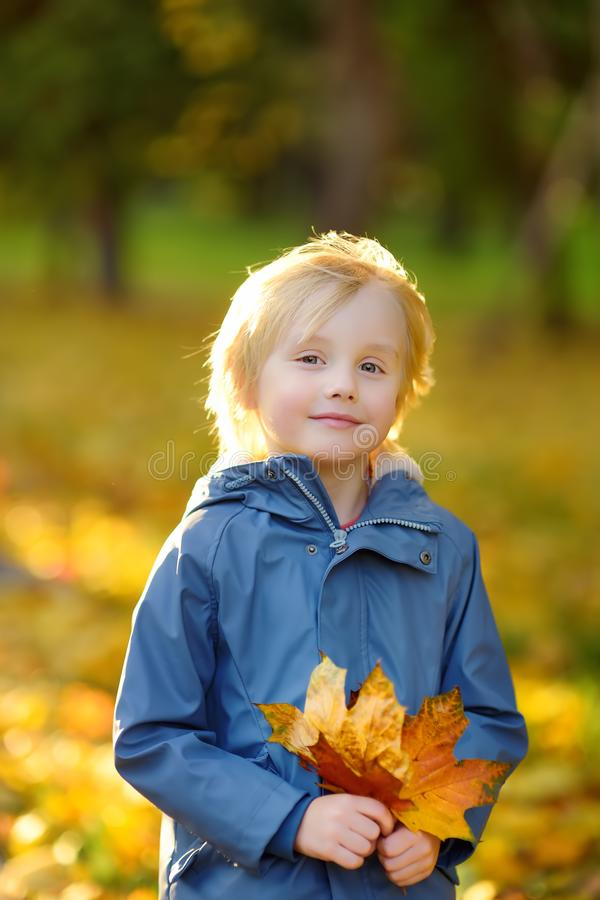 Portrait of a cute blond little boy with maple leaves in autumn park stock photography