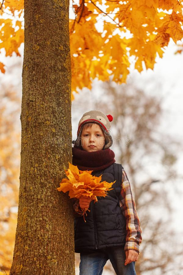 Portrait Cute boy in the autumn park. royalty free stock photo
