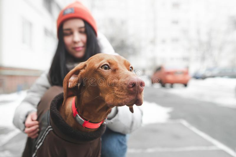 Portrait of a cute brown dog on the street looking at the background of a young woman holding him stock image