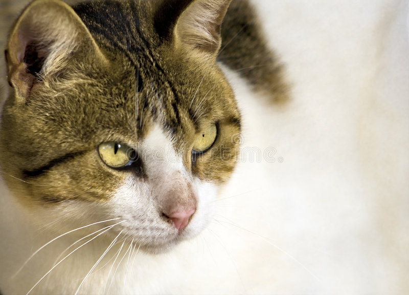 Download Portrait of cute cat stock image. Image of pricked, alert - 3951337