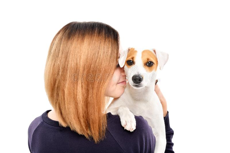 Portrait of a cute dog Jack Russell Terrier on the shoulder of its owner stock image