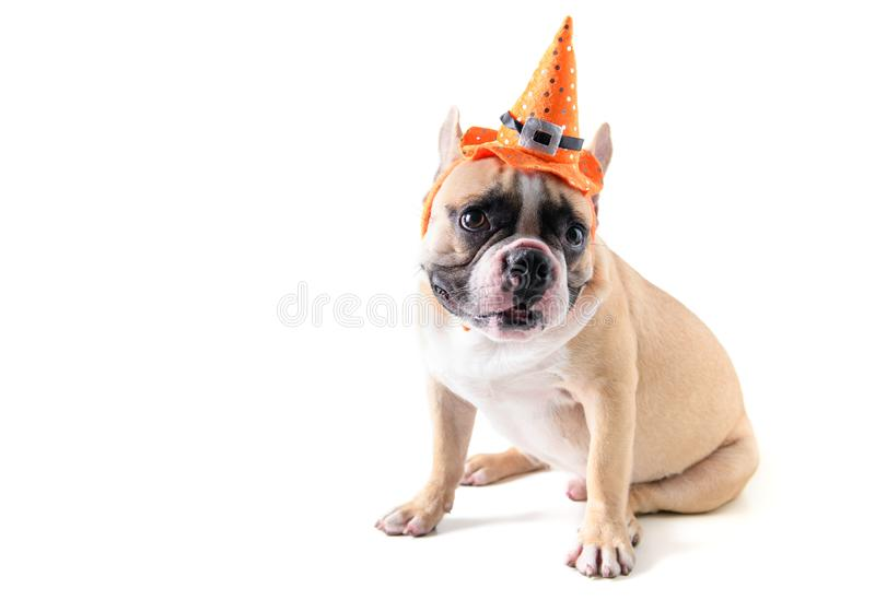 Portrait of Cute French bulldog with hat halloween isolated royalty free stock photo
