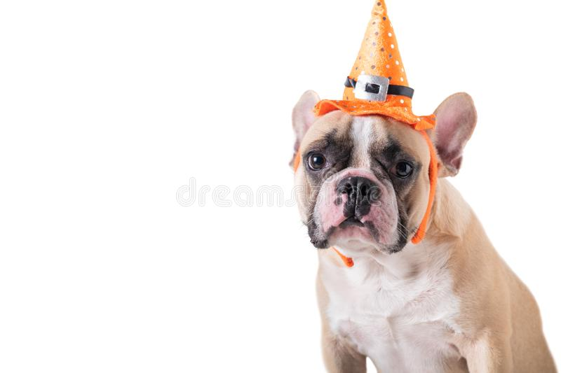 Portrait of Cute French bulldog with hat halloween isolated stock photo