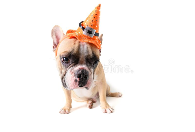 Portrait of Cute French bulldog with hat halloween stock image