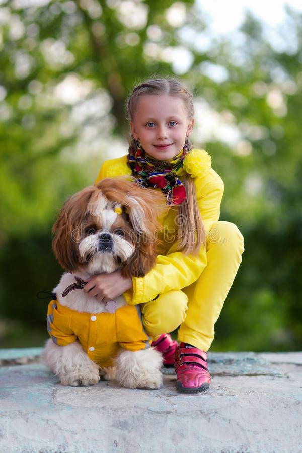 Portrait of a cute girl with a dog shi tzu. Girl walking with her dog. Girl and dog in the park in spring royalty free stock photo