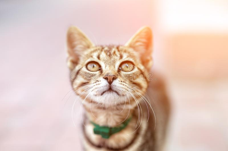 Portrait of cute happy adorable funny small tabby kitten walking outdoors at city street. Beautiful young little cat playing at. Home backyard, animal, eyes royalty free stock photography