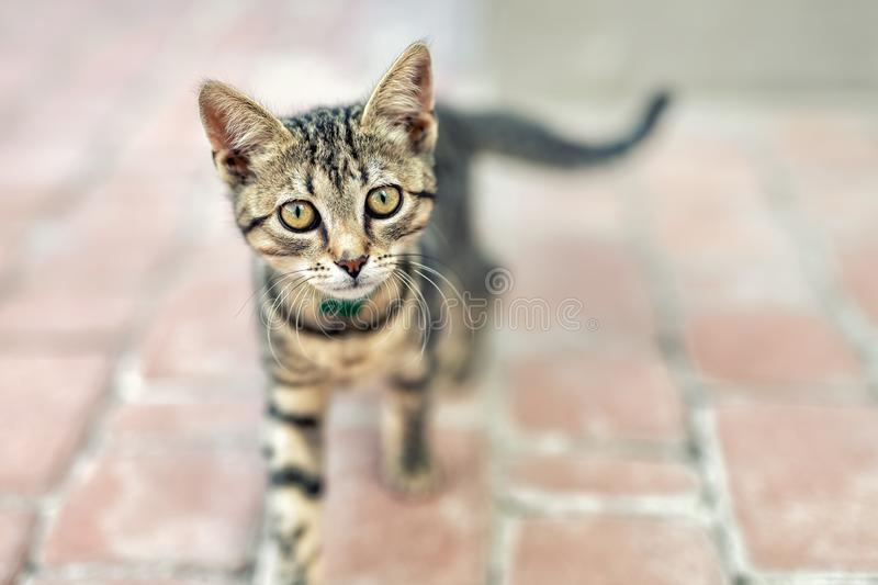 Portrait of cute happy adorable funny small tabby kitten walking outdoors at city street. Beautiful young little cat playing at. Home backyard, animal, eyes stock photos