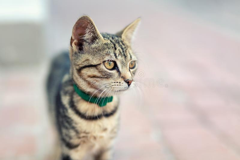 Portrait of cute happy adorable funny small tabby kitten walking outdoors at city street. Beautiful young little cat playing at royalty free stock photo