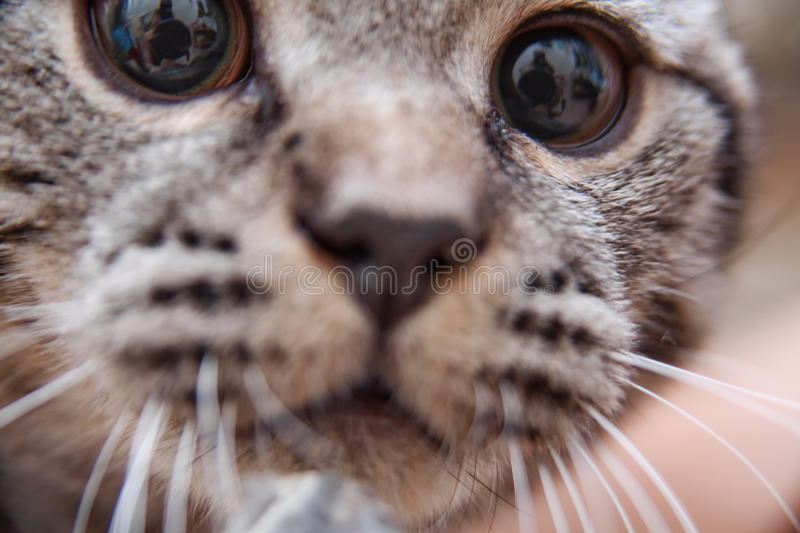 Download Portrait Of Cute Kitten Royalty Free Stock Photo - Image: 26280545
