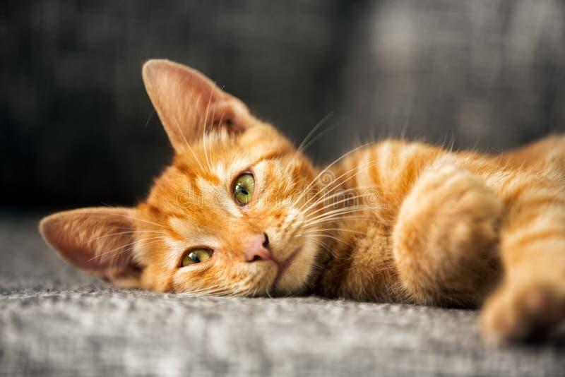 Portrait of cute kitten royalty free stock photos