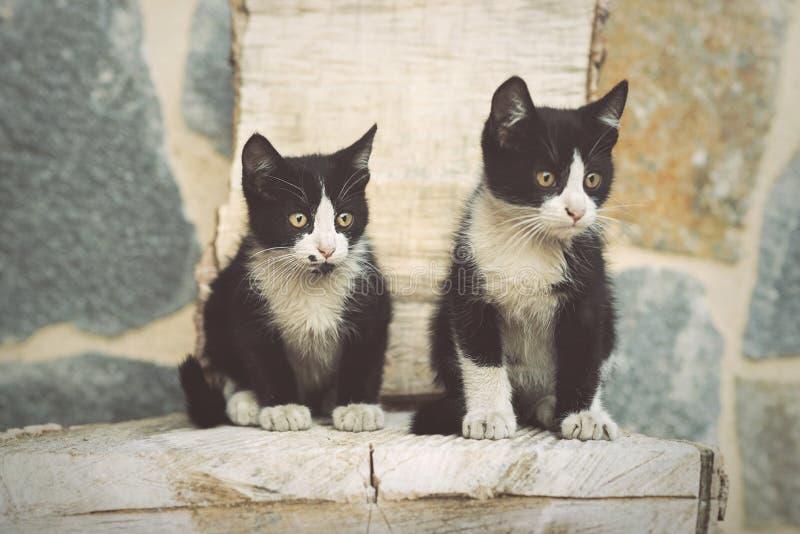 Portrait of cute kittens. Outdoor stock photo