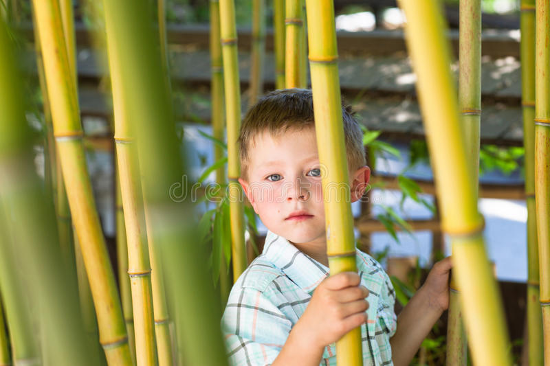 Portrait of a cute little boy hiding in bamboo royalty free stock photography