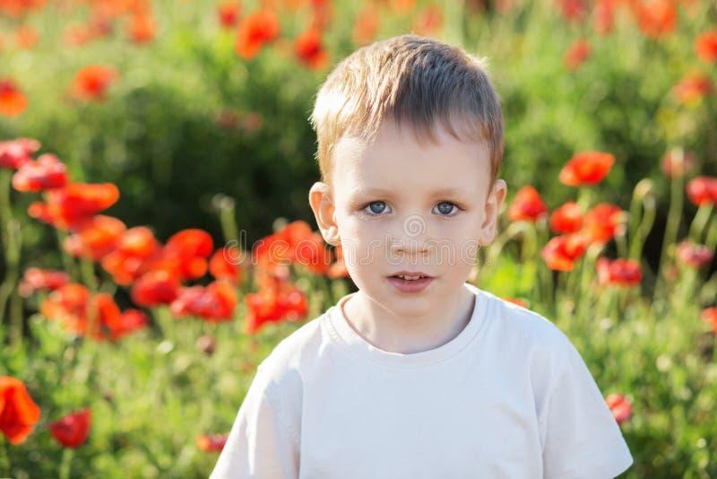 Portrait of cute little boy on poppy field stock images