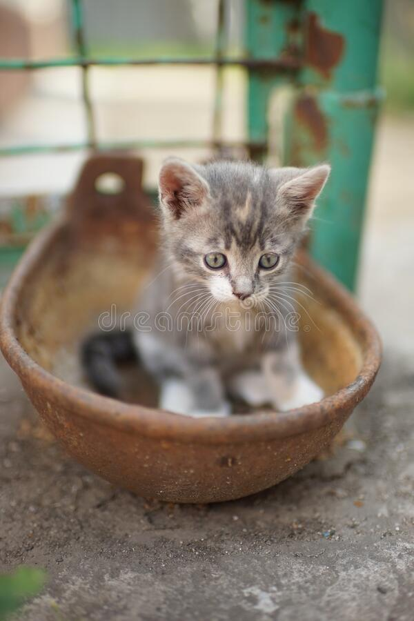 Portrait of a cute little kitty outdoors. Domestic lovely cat. Charming playfull baby animal. Cat play in a rusty bowl.  stock images