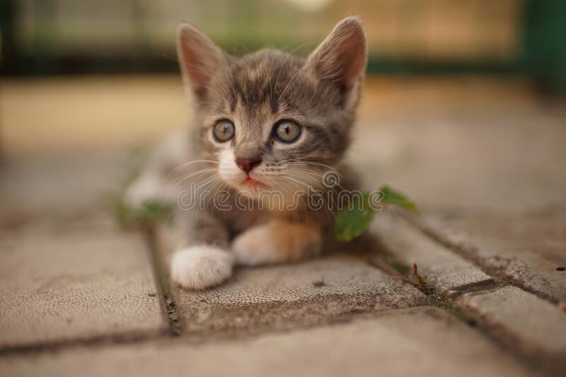 Portrait of a cute little kitty resting outdoors. Domestic lovely cat. Charming baby animal.  stock photo