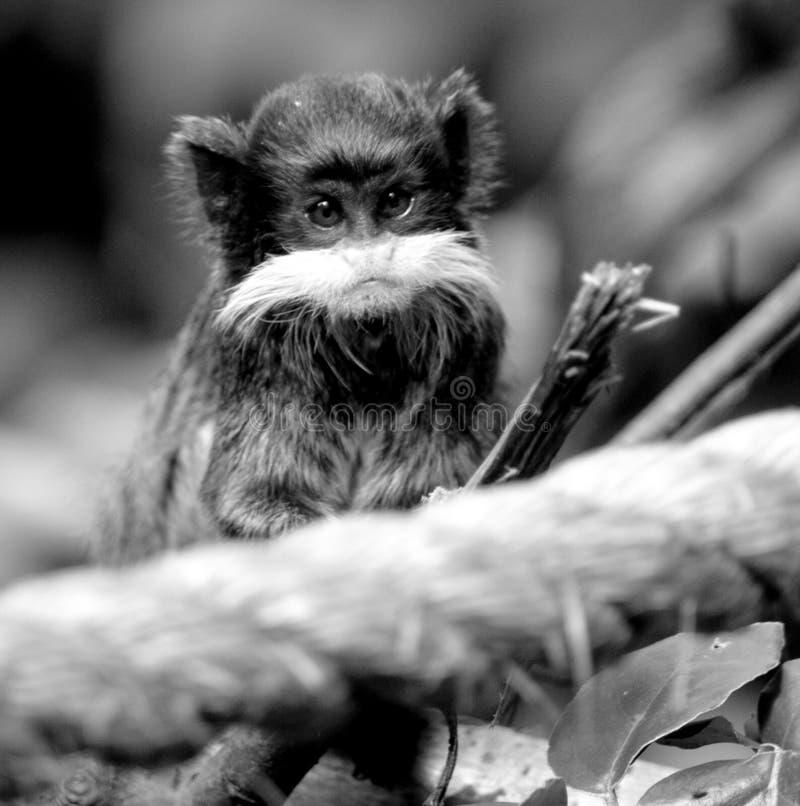 Portrait of cute monkey stock image