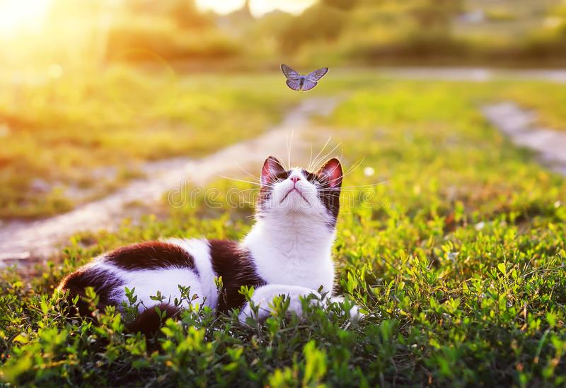 Portrait of a cute striped cat lying in the grass in a Sunny meadow and looking at a beautiful little blue butterfly flying stock image