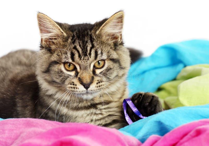 Portrait of cute tabby kitten royalty free stock photo