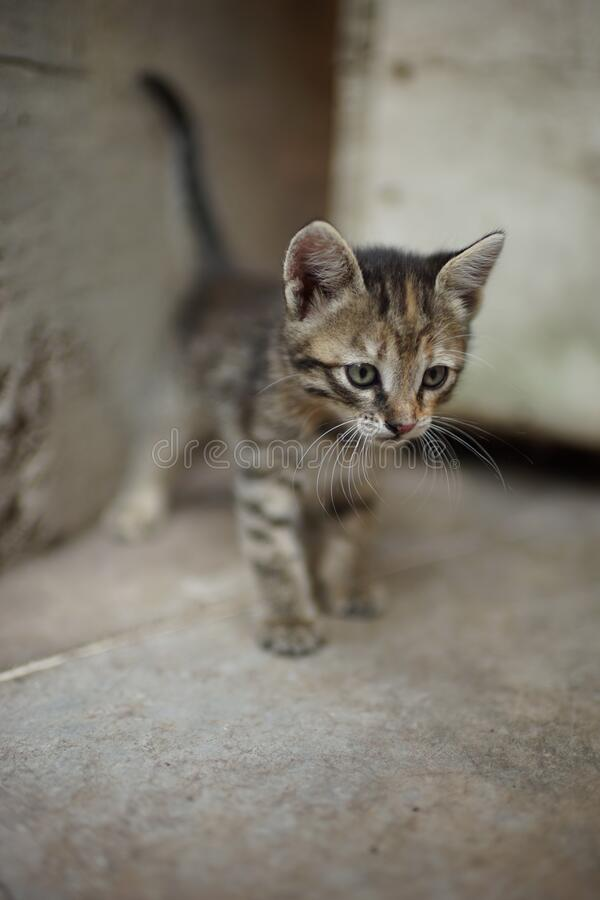 Portrait of a cute tabby little kitten outdoors. Domestic lovely cat. Charming baby animal.  stock photography