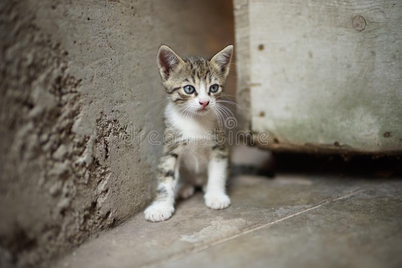 Portrait of a cute tabby little kitty sitting outdoors, domestic lovely cat, charming baby animal.  stock photos