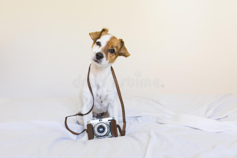 Portrait of a cute young small dog over with a vintage camera. S stock image