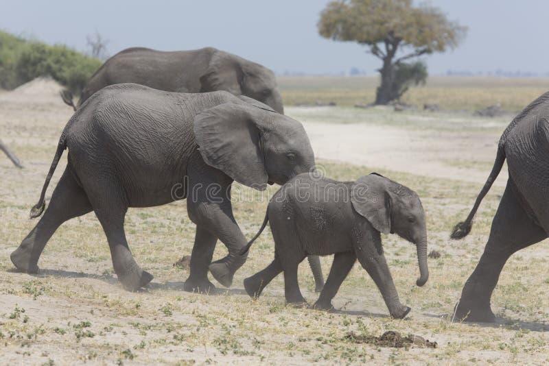 Portrait d'éléphant gratuit sauvage photographie stock libre de droits
